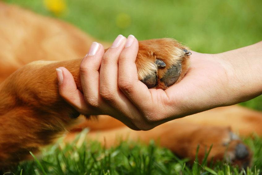 Nous et les animaux - Communication animale