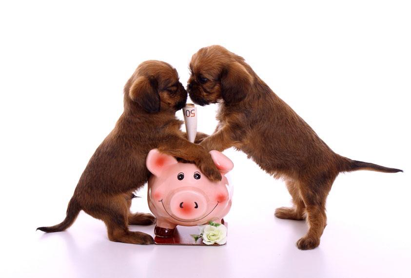 Prix des soins pour humains et animaux
