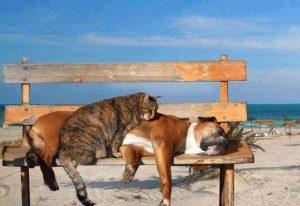 soins pour son animal